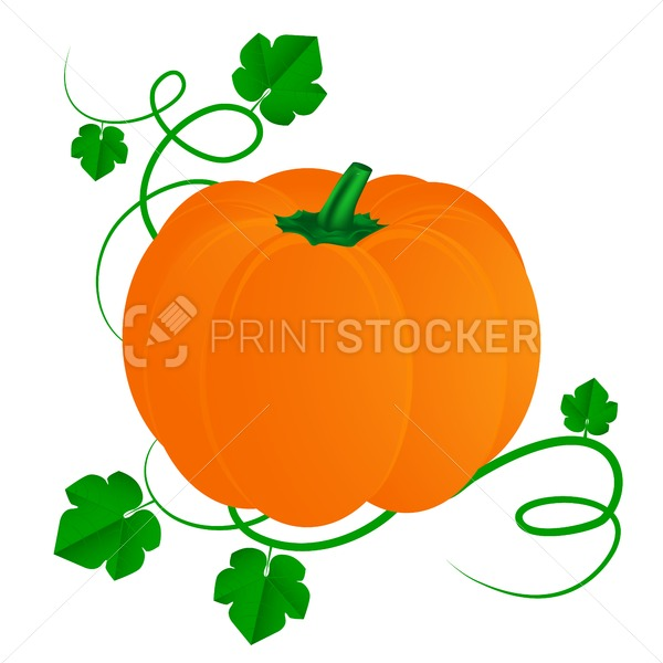 Pumpkin with leaves for Halloween isolated on white  background - PrintStocker.com