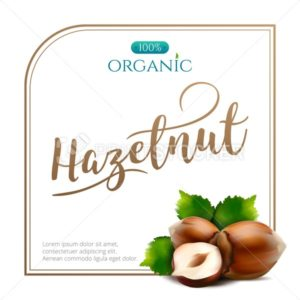 Vector frame of realistic hazelnut with leaves isolated on white background - PrintStocker.com
