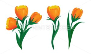 Set of blooming orange tulips with green leaves in different shapes. Vector illustration of spring flowers isolated on white background. Can be used for web banners design or other advertising layouts - PrintStocker.com