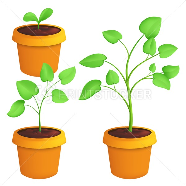 Different stages of growing young plant. Vector botanical set illustration of a green sprout with leaves in pot isolated on white background - PrintStocker.com