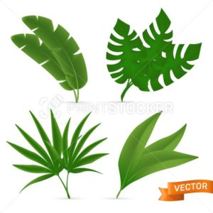 Exotic tropical palm leaves set. Vector illustration of various green foliage isolated on white background - PrintStocker.com