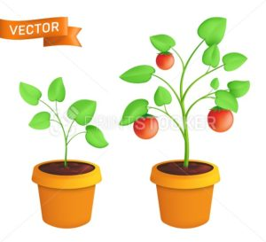 Tomato eco plant growing stages. Vector botanical illustration of green sprout with leaves in pot isolated on white background - PrintStocker.com