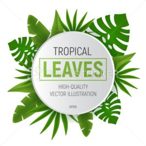 Tropical leaves round frame with green palm tree leaf. Vector illustration isolated on white background - PrintStocker.com