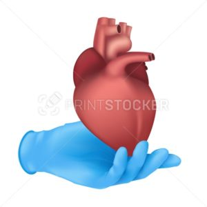 Realistic medical organ concept with a hand in a blue rubber glove holding a human heart internal body part. Vector anatomical illustration of the circulatory system isolated on white background - PrintStocker.com