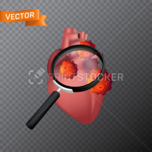 Human heart under a magnifying glass with viral cells. Vector medical illustration of finding virus or search in the internal organ with a magnifier isolated on a transparent background - PrintStocker.com