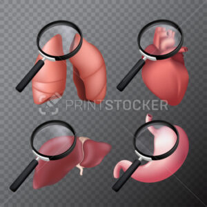 Set of human body organs with a magnifying glass – lungs, heart, liver, stomach. 3D realistic vector illustration on a transparent background - PrintStocker.com