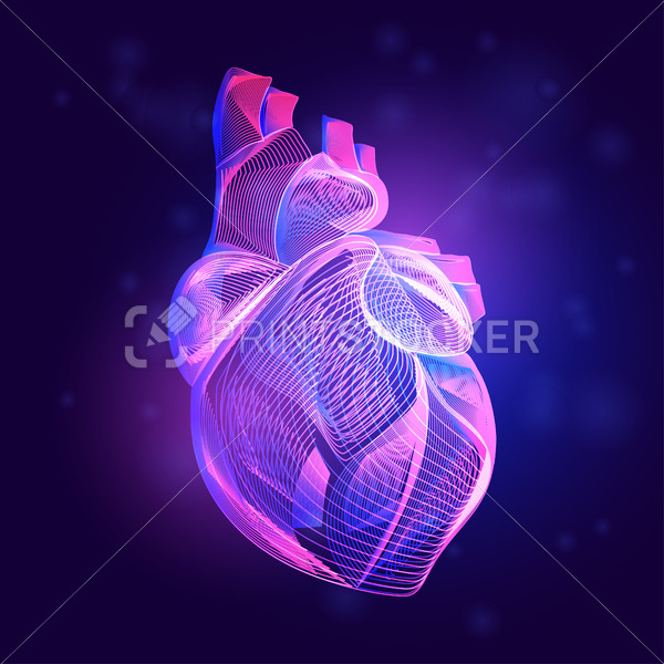 Human heart medical structure. Outline vector illustration of body part organ anatomy in 3d line art style on neon abstract background - PrintStocker.com