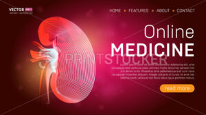 Online medicine landing page template or medical hero banner design concept. Human kidney outline organ vector illustration in 3d line art style on abstract background - PrintStocker.com