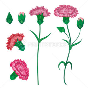 Vector red carnation or clove flower spring bouquet floral set with different blooming purple garden blossom illustration isolated on white background Perfect to use on banner or greeting card design - PrintStocker.com