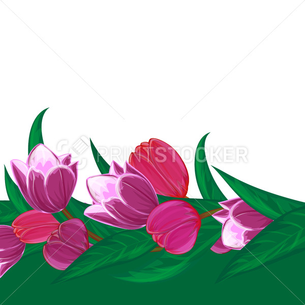 Vector tulips flower bouquet decorative frame or spring nature season pink floral border with blooming red and purple garden blossom illustration and place for text isolated on white background - PrintStocker.com