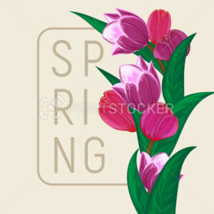 Vector tulips flower bouquet square frame or spring floral border with blooming red and purple garden blossom illustration Can be used in postcard or greeting card graphic design to happy mothers day - PrintStocker.com