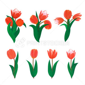Vector tulips flower spring bouquet floral set with diffrent blooming red garden blossom illustration isolated on white background Perfect to use in postcard or greeting banner graphic design concept - PrintStocker.com