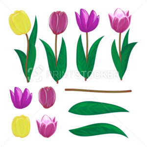 Vector tulips flower spring bouquet floral set with diffrent blooming red yellow and purple garden blossom illustration isolated on white background Perfect to use in postcard or greeting card design - PrintStocker.com