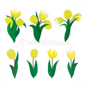 Vector tulips flower spring bouquet floral set with diffrent blooming yellow garden blossom illustration isolated on white background Perfect to use in postcard or greeting banner graphic design - PrintStocker.com