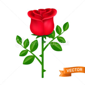 Red rose with green leaves vector icon. Blooming flower close-up cartoon illustration isolated on a white background - PrintStocker.com