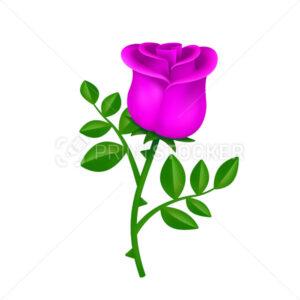 Beautiful blossom pink rose with green leaves isolated on white background - PrintStocker.com