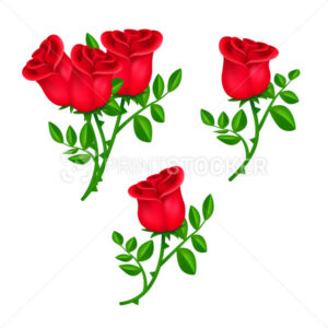 Set of beautiful blooming red roses with green leaves isolated on white background - PrintStocker.com