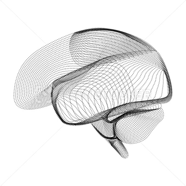 Human brain silhouette consisting of black dots and particles. 3D vector wireframe of internal organ with a grain texture. Abstract geometric icon with dotted structure isolated on a white background - PrintStocker.com