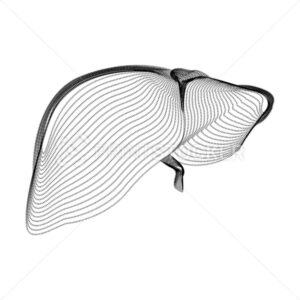 Liver silhouette consisting of black dots and particles. 3D vector wireframe of an internal organ with a grain texture. Abstract geometric icon with dotted structure isolated on a white background - PrintStocker.com