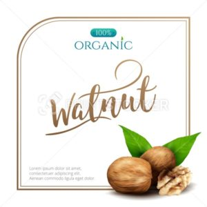 Vector frame of realistic walnut with leaves isolated on white background - PrintStocker.com