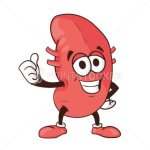 Vector kidney cartoon human body health organ smiling mascot character illustration isolated on white background Perfect to use for medical awareness poster or company logo symbol template design - PrintStocker.com